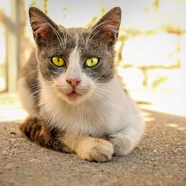 by Nina Bogdan - Animals - Cats Portraits