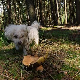 Boletus:) by Libuše Kludská - Landscapes Forests