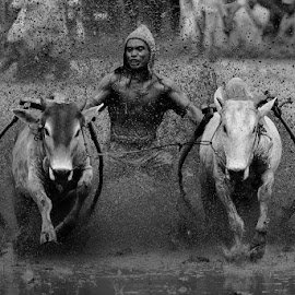 Spirit of race by MemenSaputra Mms - Sports & Fitness Other Sports ( cow race, memensaputramms, travel, pacu jawi, sumbar, culture, minang )