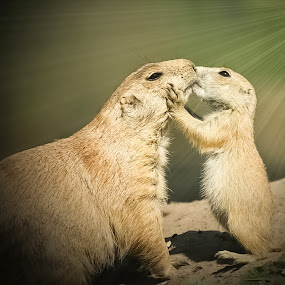 Say goodnight to Mom by Jürgen Sprengart - Digital Art Animals ( kissing, prairiedogs, night, goodnight )