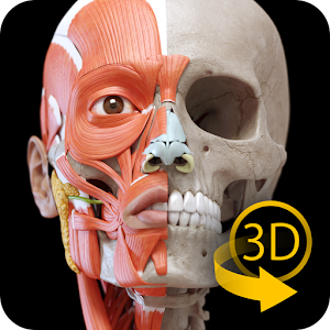 Download Muscular System - 3D Anatomy APK