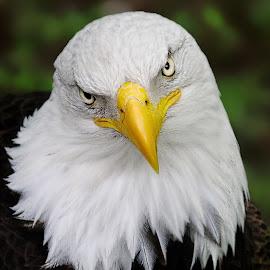 Seriously? by John Larson - Animals Birds