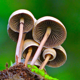 Beauty in the wild by Asif Bora - Nature Up Close Mushrooms & Fungi (  )