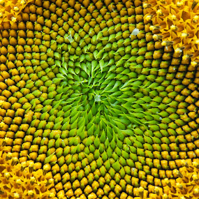 Sunny Macro by Kelvin Watkins - Nature Up Close Flowers - 2011-2013 ( macro, bright, green, summer, seeds, yellow, flower )