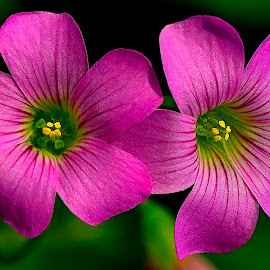by Francois Wolfaardt - Flowers Flowers in the Wild