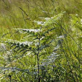Ticino, Rasa - Intragna, Switzerland by Serguei Ouklonski - Nature Up Close Leaves & Grasses ( mountain, outdoors, nature, grass, hiking, landscape, scenics )
