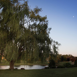 Willow and the Moon by Christa Ehrstein - City,  Street & Park  Neighborhoods (  )