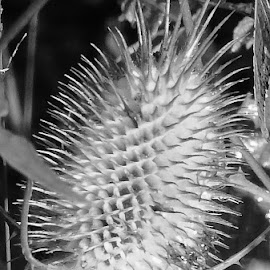 by Gerard Hildebrandt - Black & White Macro (  )