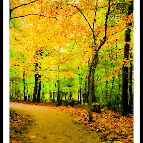... by Jon Hunter - City,  Street & Park  City Parks ( colour, pathway, autumn, fall, path, trees, road, leaves, golden )