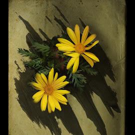 Dancin' Daisies by Bobbi Mercouri - Digital Art Things ( mercouri, green, daisies, yellow, flowers, digital )