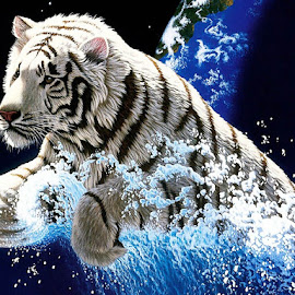 desktop-year-of-the-tiger by India Dhumsi - Digital Art Animals ( tiger, beautiful, blue water, brown, black )