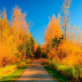 Alberta City Park by Joseph Law - City,  Street & Park  City Parks