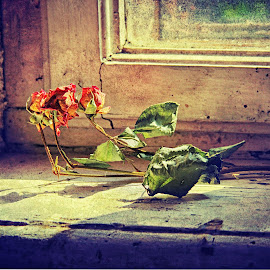 Past years by Panait Sorin - Artistic Objects Still Life ( canon, rose, window, years, past )