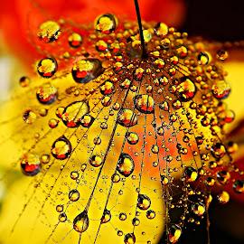 Colorful Prelude by Marija Jilek - Nature Up Close Natural Waterdrops