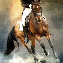 The Champion by Bjørn Borge-Lunde - Digital Art Animals ( horseback, riding, horse, grand prix, competition, animal )