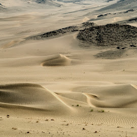 Twisted by Deon Warrington - Landscapes Deserts ( wind, sand, dunes, desert, morning, sun )