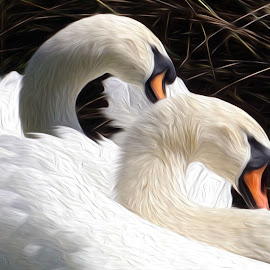 Swans using oil paint effect by Alycia Marshall-Steen - Digital Art Animals