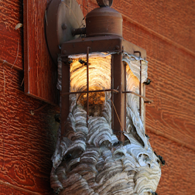 A Nest With Lighting by Skip Spurgeon - Nature Up Close Hives & Nests ( nest, hornets, porch light )