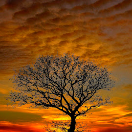 yggdrasil by Kim Moeller Kjaer - Landscapes Sunsets & Sunrises