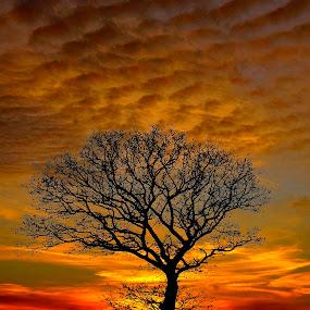 yggdrasil by Kim Moeller Kjaer - Landscapes Sunsets & Sunrises (  )