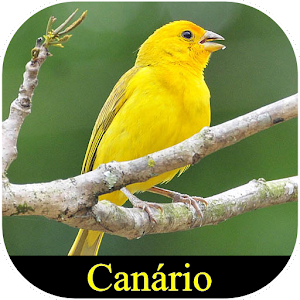 Meu Canário for PC-Windows 7,8,10 and Mac