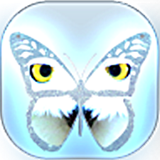 Guess Butterfly Puzzle
