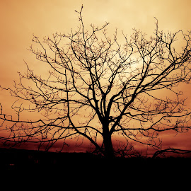 Naked Tree in sunset by Jørn Lavoll - Landscapes Sunsets & Sunrises ( orange, tree, silhouette, sunset, night )