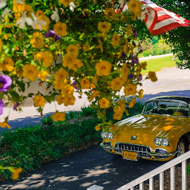 Vintage by Jervin Reyes - Transportation Automobiles ( automobiles, vintage, cars, yellow, flowers, porch, spring )