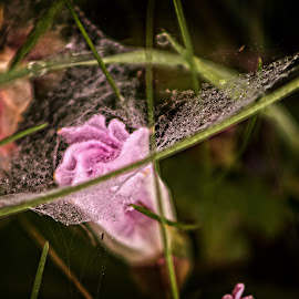 Tangled web by Glenda Clausen - Digital Art Things ( green, spiderweb, pink, wet, blossom )