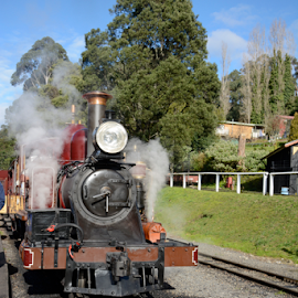 Puffing Billy by Maria Skidmore - Transportation Trains ( billy, 2014, australia, train, nikon, skidmore, steam, puffing )