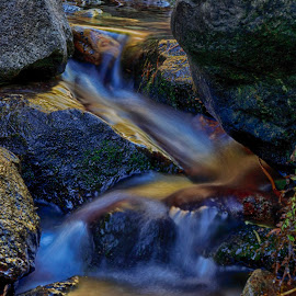 Alder Creek 1 by Danny Bruza - Nature Up Close Water ( alder creek, alpine village, water )