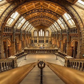 Natural History Museum by Nick Moulds - Buildings & Architecture Public & Historical ( interior, england, london, museum, natural history museum,  )