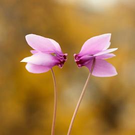 by Biljana Nikolic - Flowers Flowers in the Wild