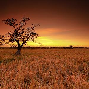 alonetree.jpg