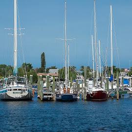 Sail Boats by Sandy Friedkin - Transportation Boats ( marina, sail boats, docked, st lucie river )