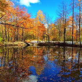by Jeffrey Goodman - Landscapes Forests