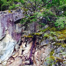 Rock vs.Tree by Debra Branigan - Nature Up Close Trees & Bushes ( nature up close, rock, iphone, trees & bushes, photography,  )