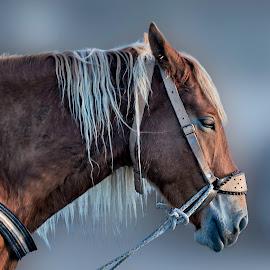 Pure Horsepower by Andrius La Rotta Esquivel - Animals Horses ( amazing, animals, horses, art, horse, photographer, photography, animal )