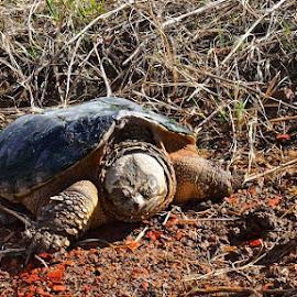 Found a creature along the way... by Barbara Olstad - Animals Amphibians