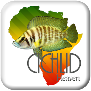 Cichlid Heaven For PC / Windows 7/8/10 / Mac – Free Download