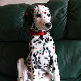 Extra spots by Lena Mvv - Animals - Dogs Puppies