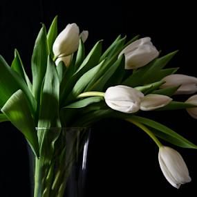 by Jill Beim - Flowers Flower Arangements ( arrangement, white, tulips, flowers, black )