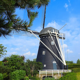 Dutch windmill in Brabant by Bob Has - Buildings & Architecture Public & Historical ( brabant, old, dutch, windmill )