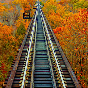 Fall Bridge by SumPics Photography - Transportation Trains ( orange, buy-canvas-art, buy-photo-on-canvas, photo-print, artphoto, track, trestle, leaf, leaves, west fork, buy-art-photos, missouri, tree, nature, art-photography, fall, train, bridge, arkansas )