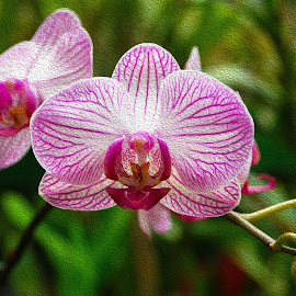 Orchid in bloom by Pravine Chester - Digital Art Things ( photograph, nature, orchid, digital art, digital painting, flower, manipulation )