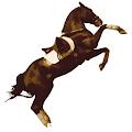 Study Of Horses TF Quiz