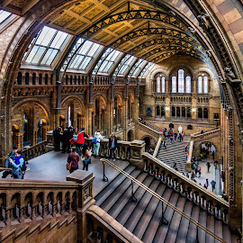 Day at the Museum by Jan Murphy - Buildings & Architecture Other Interior ( prehistoric, windows, museum, people, lights, history, railings, stairs, exhibits, london, starbursts, fossils, public, natural history museum )