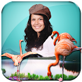 3D Birds Live Wallpaper APK for Bluestacks