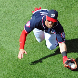 Bryce Harper Diving Catach by Mark Goldman - Sports & Fitness Baseball ( hotshot, professional, nationals park, phillies, field, major league baseball, washington, nats, baseball field, baseball, philadelphia phillies, nationals, d.c., washington nationals, baseball game, mlb, phils )
