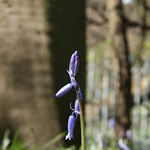 A Cold Spring
